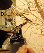 D-tree-solder-more-wires