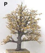 P-tree-leaves4