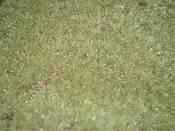 6grasses_008