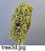 tree3d
